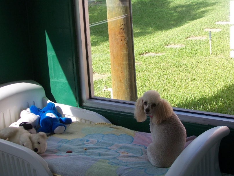 Check out our pet windows!